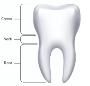 tooth_example
